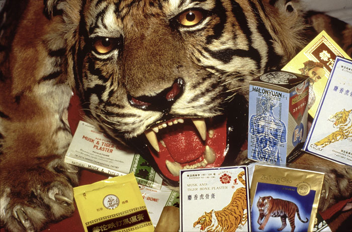 Chinese medicines containing tiger and rhino parts confiscated by the USFWS.  Los Angeles Airport, USA